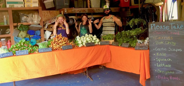 wily-carrot-csa-community-supported-agriculture-money-shot